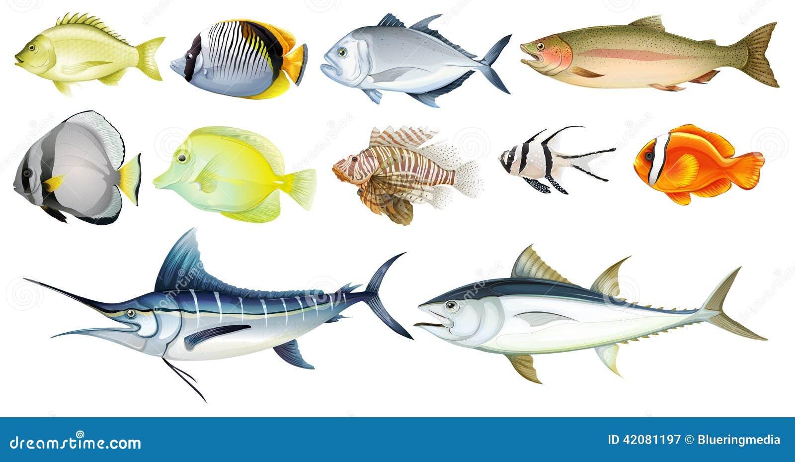 Olika fiskar