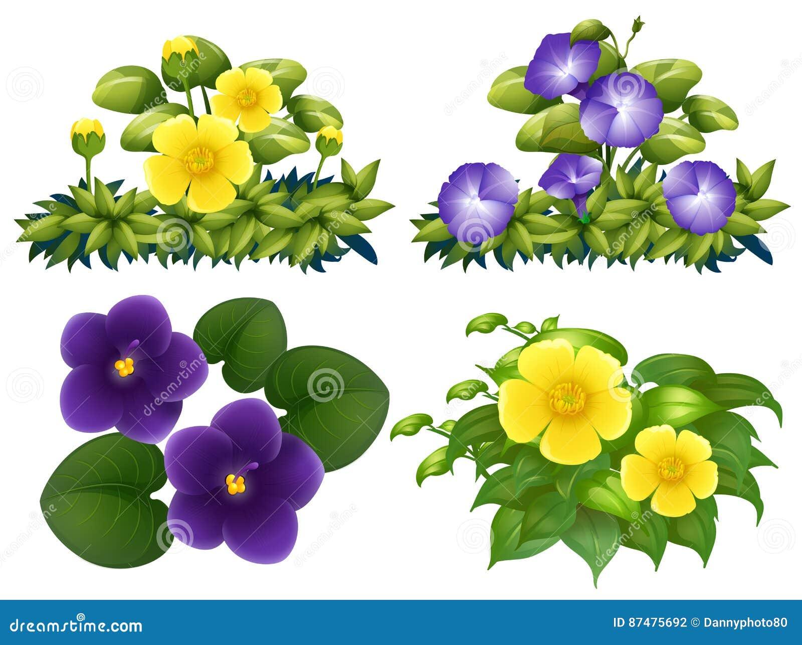 Olika typer av blommor i buske
