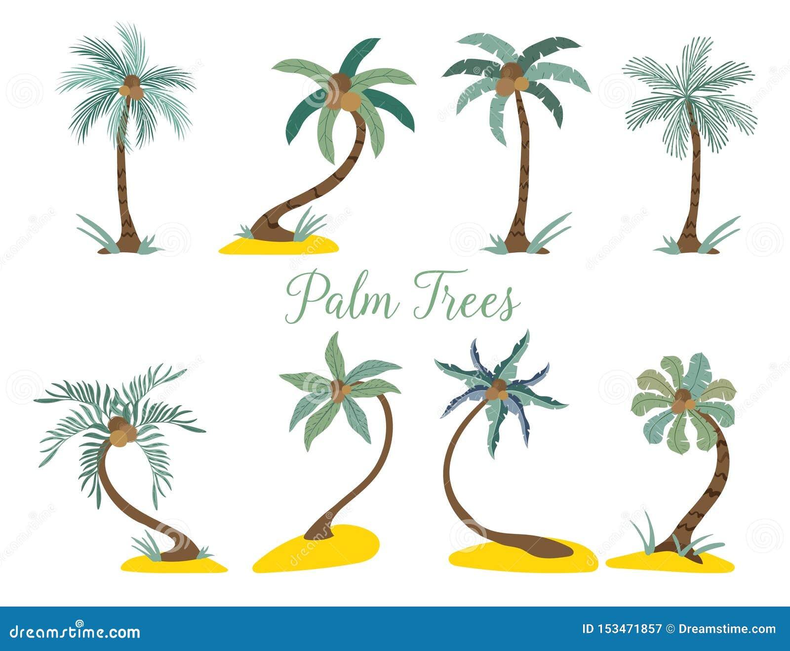 Olika typpalmträd på stranden