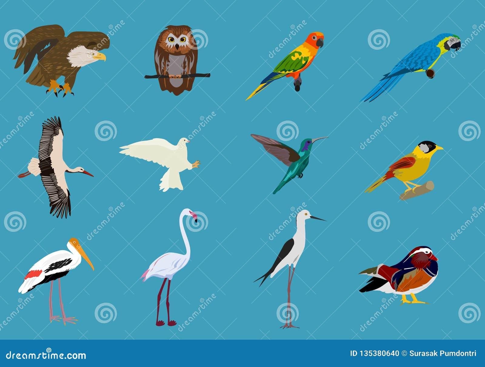 Olika uppsättningar av fåglar blå bakgrund, djurvektor