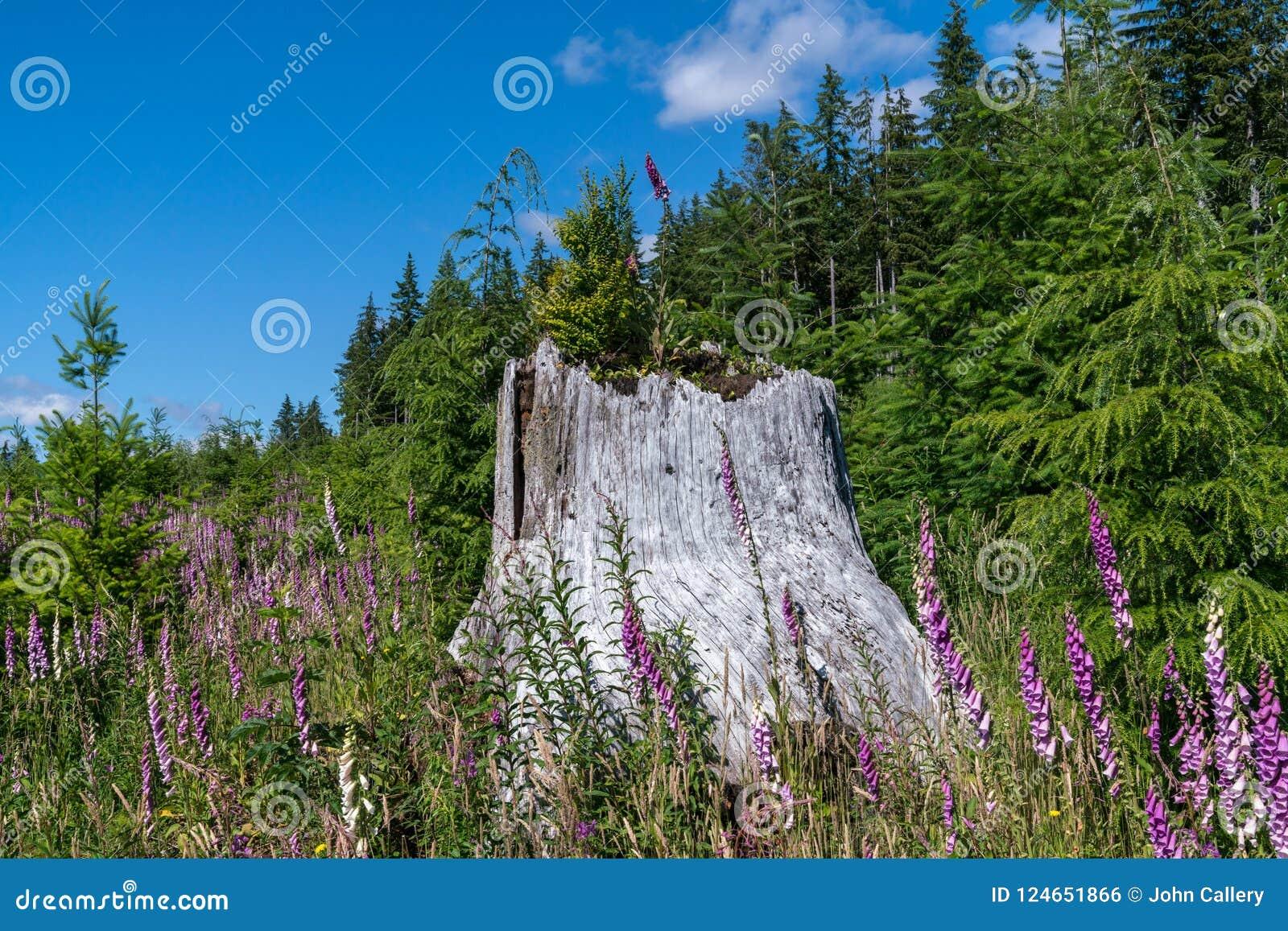 Olimpijski las państwowy Na Pogodnym Lipa dniu