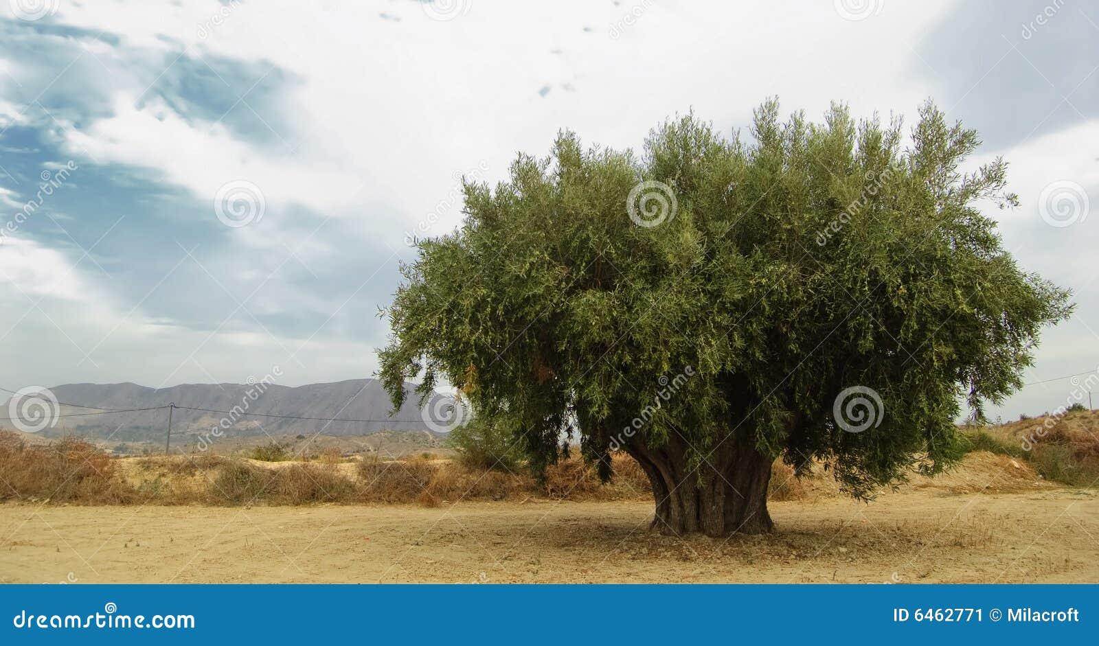 Olive,