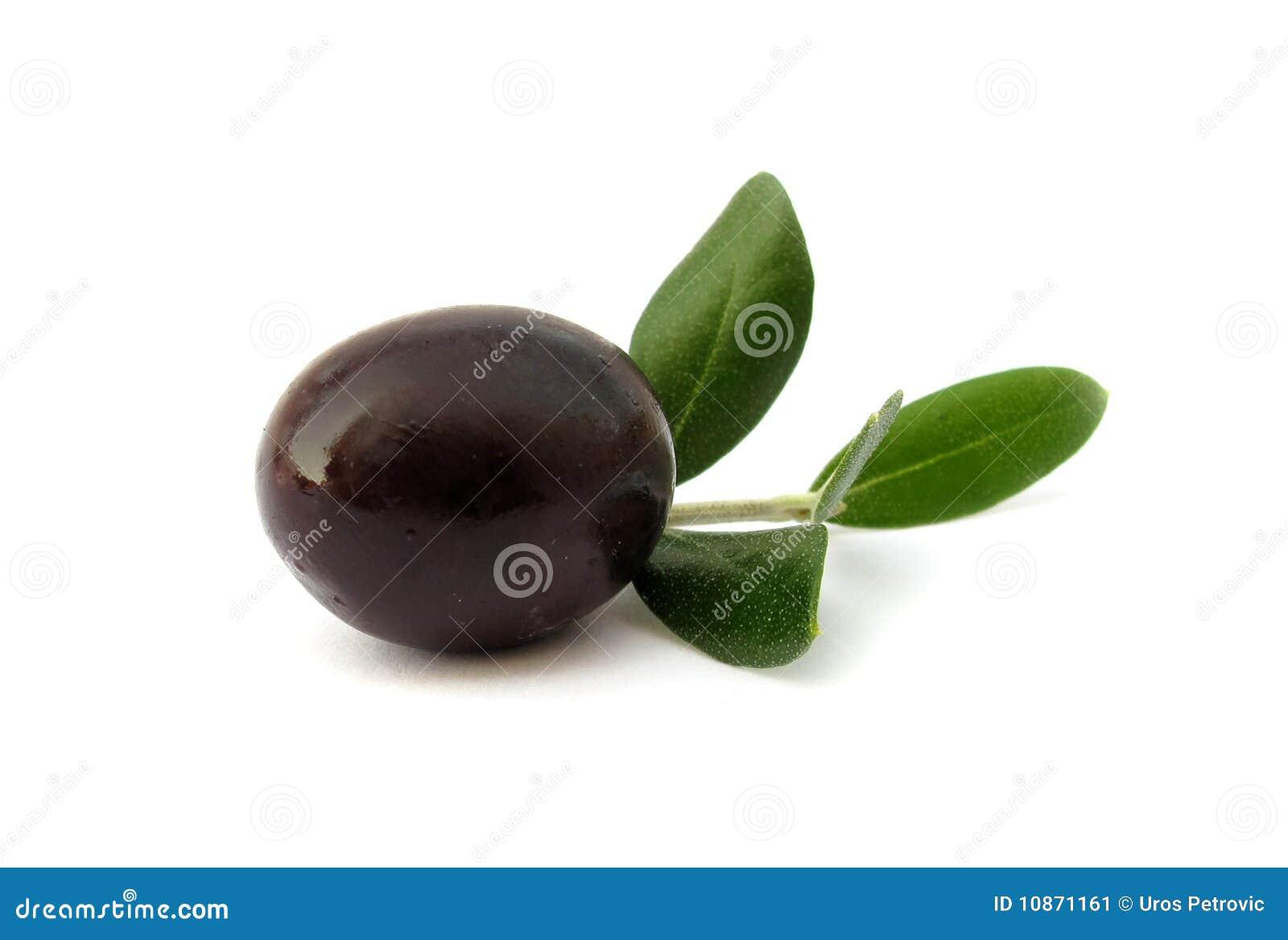 Olive black med gröna leaves