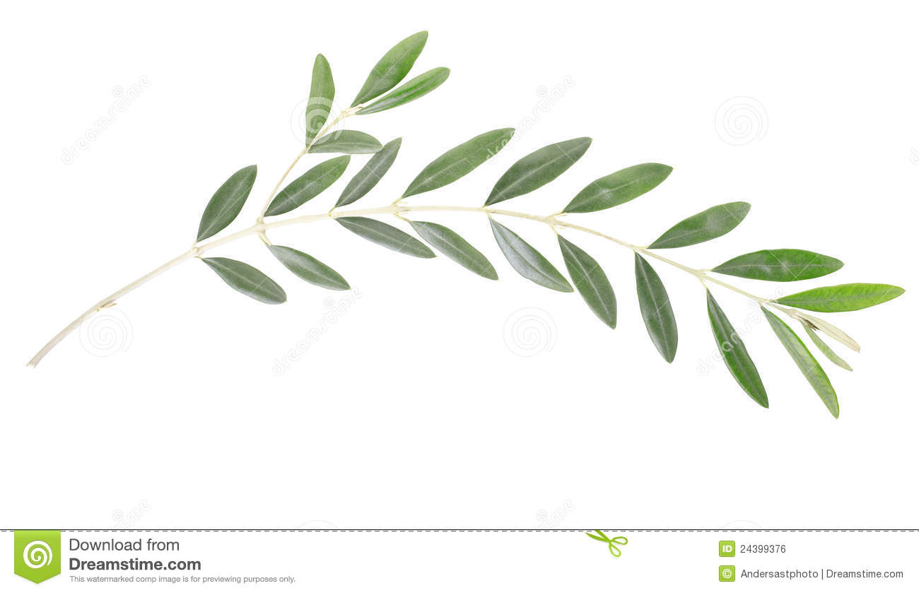 olive branch stock photo image of olive food background 24399376 rh dreamstime com olive branch clipsham review olive branch clipsham restaurant