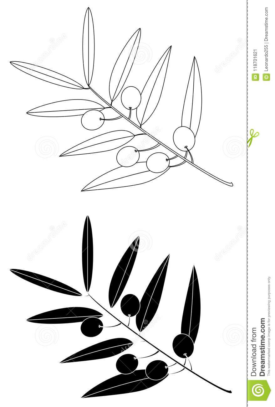 Olive Branch Drawing Set Stock Vector Illustration Of Isolated 118701621