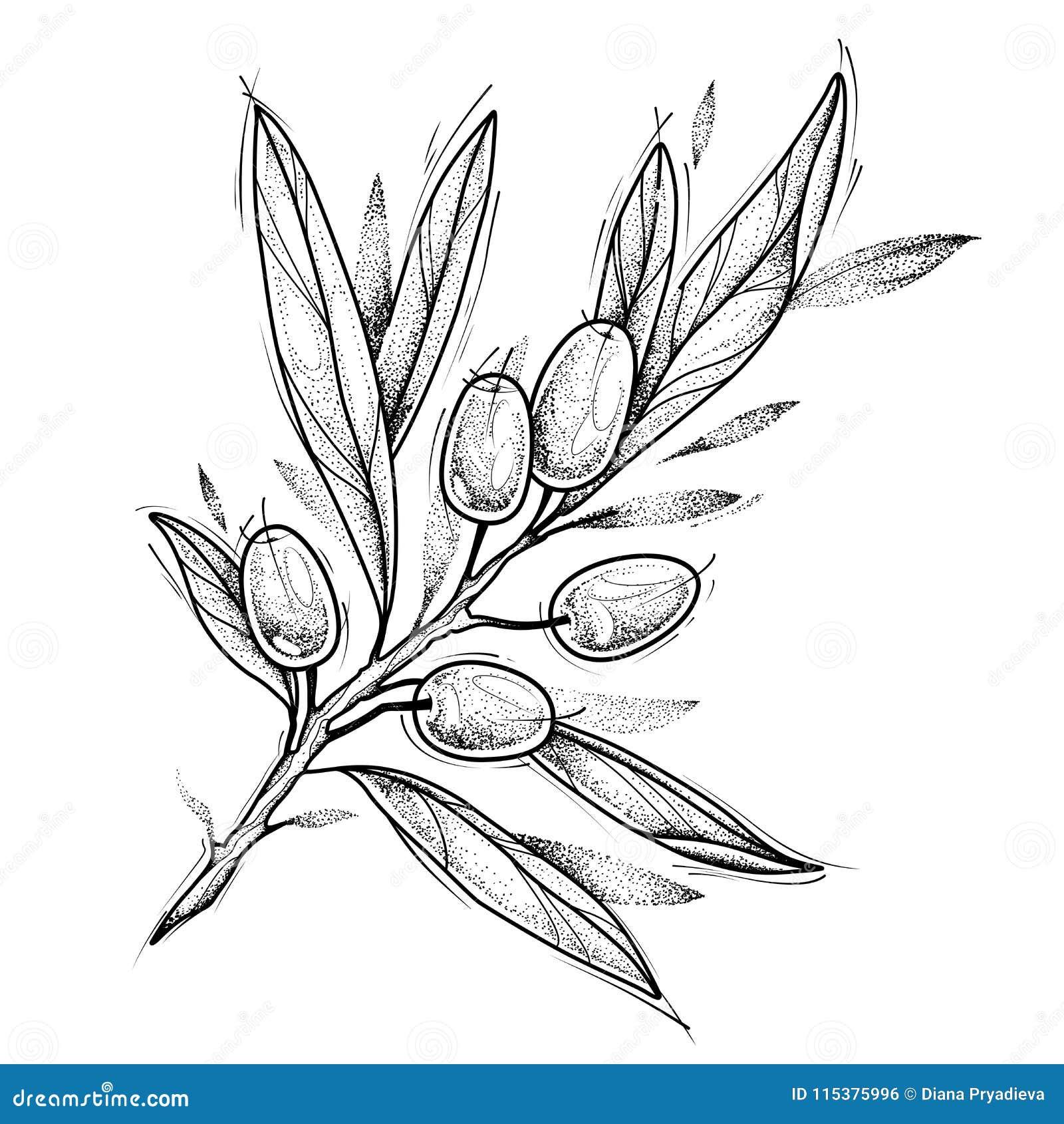 Olive Branch Tatuagem Design Ilustracao Do Vetor Isolada No Branco Ilustracao Do Vetor Ilustracao De Olive Branch 115375996