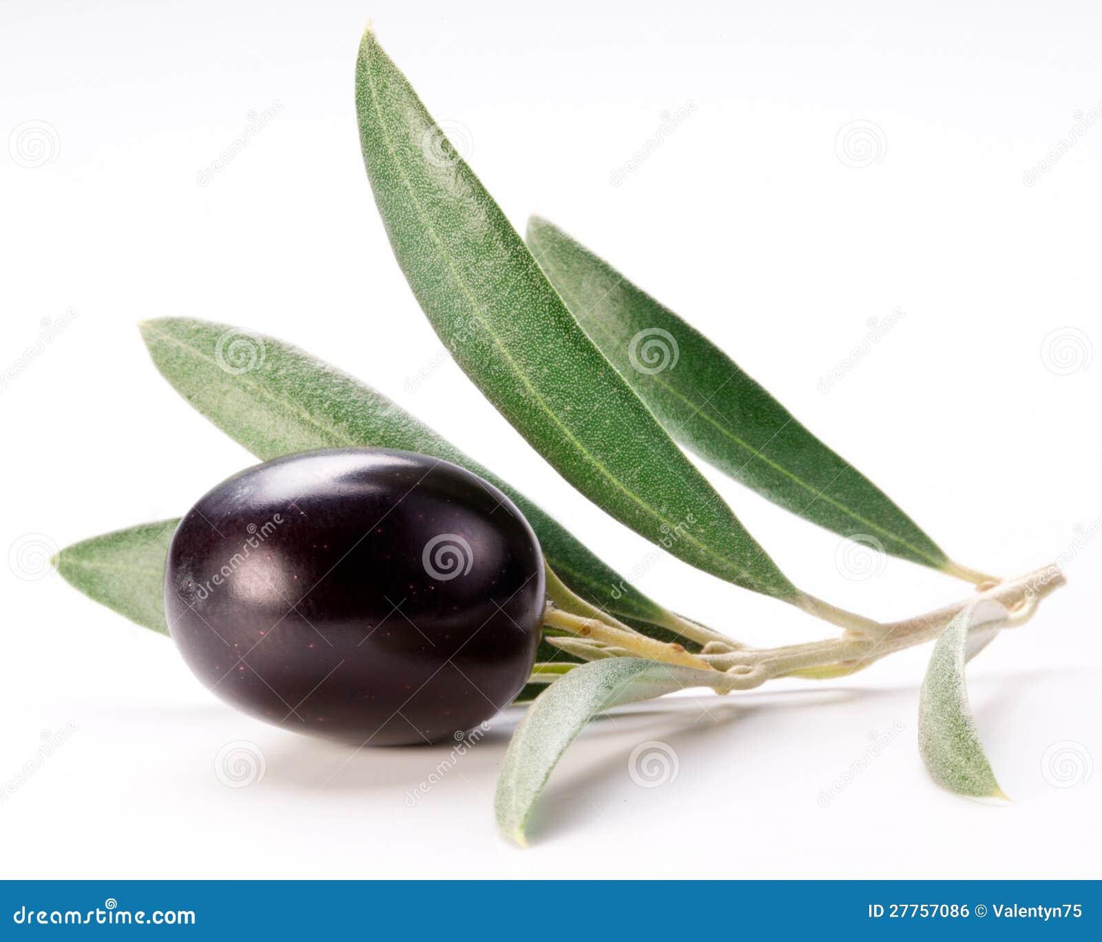 Olive noire mûre avec des lames.