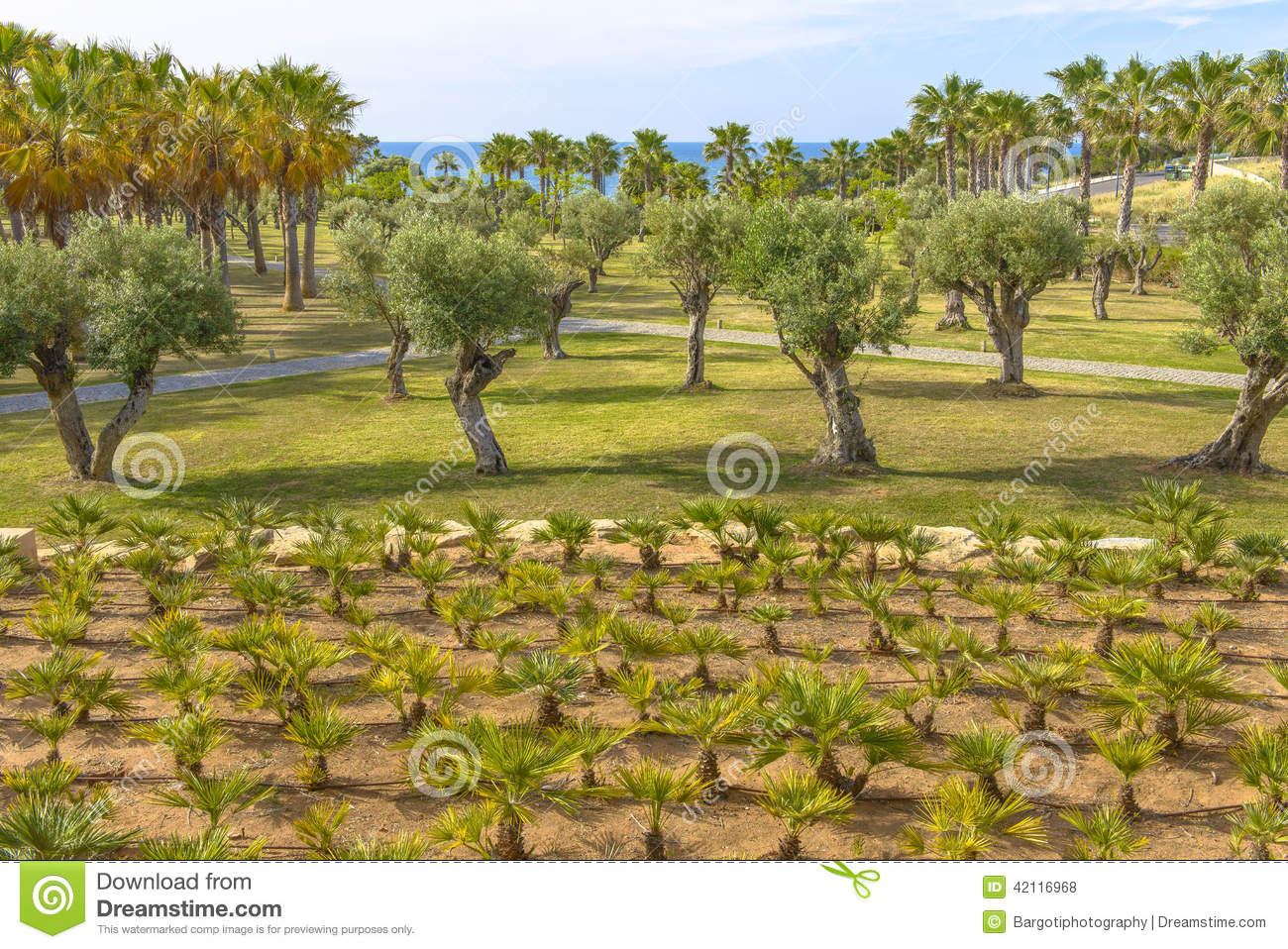 Old Olive And Palm Trees Offered For Sale Royalty Free Stock Image 76743898