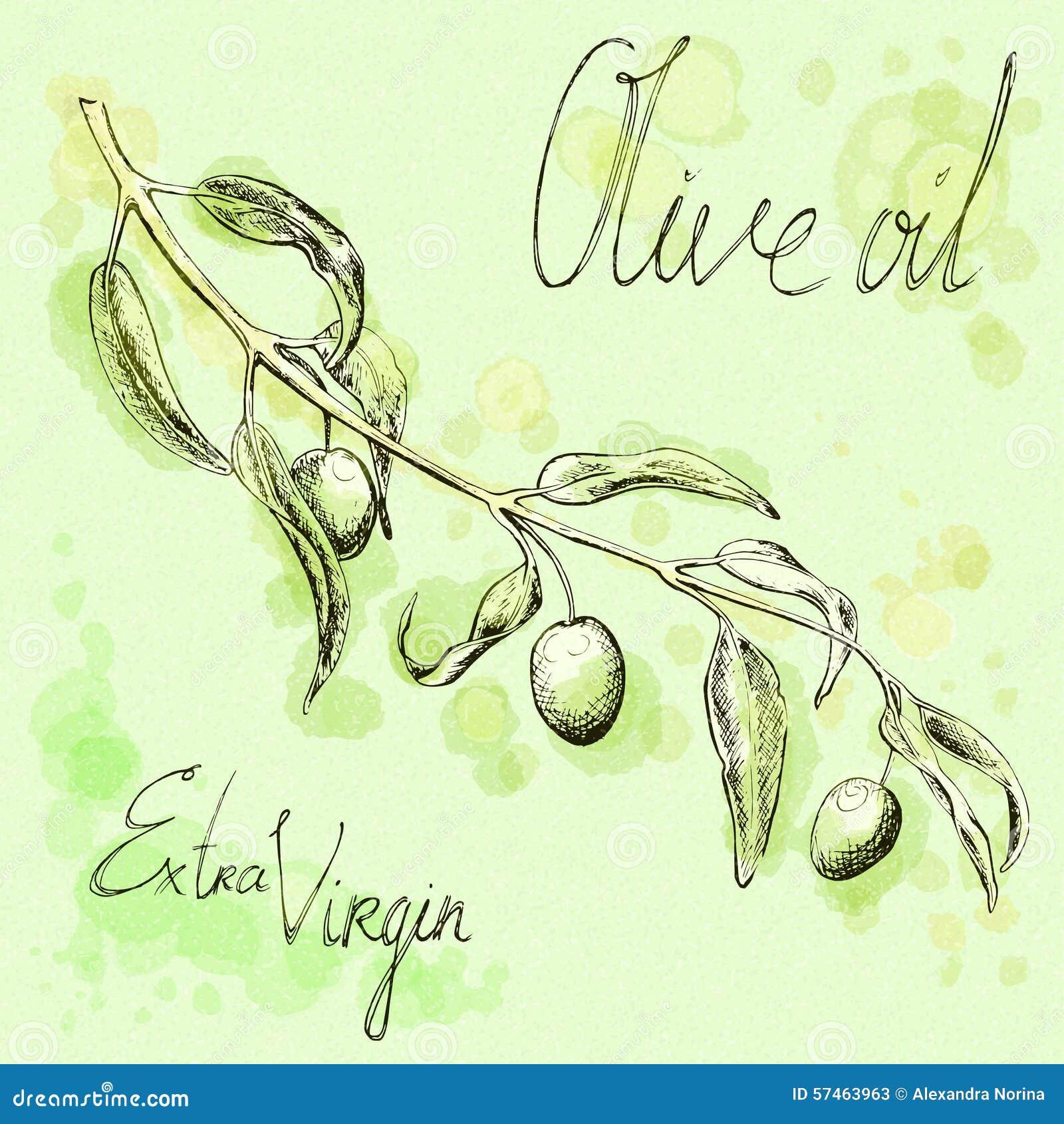 Olive Tree Branch Sketch, Hand-drawn Illustration Stock Vector ...