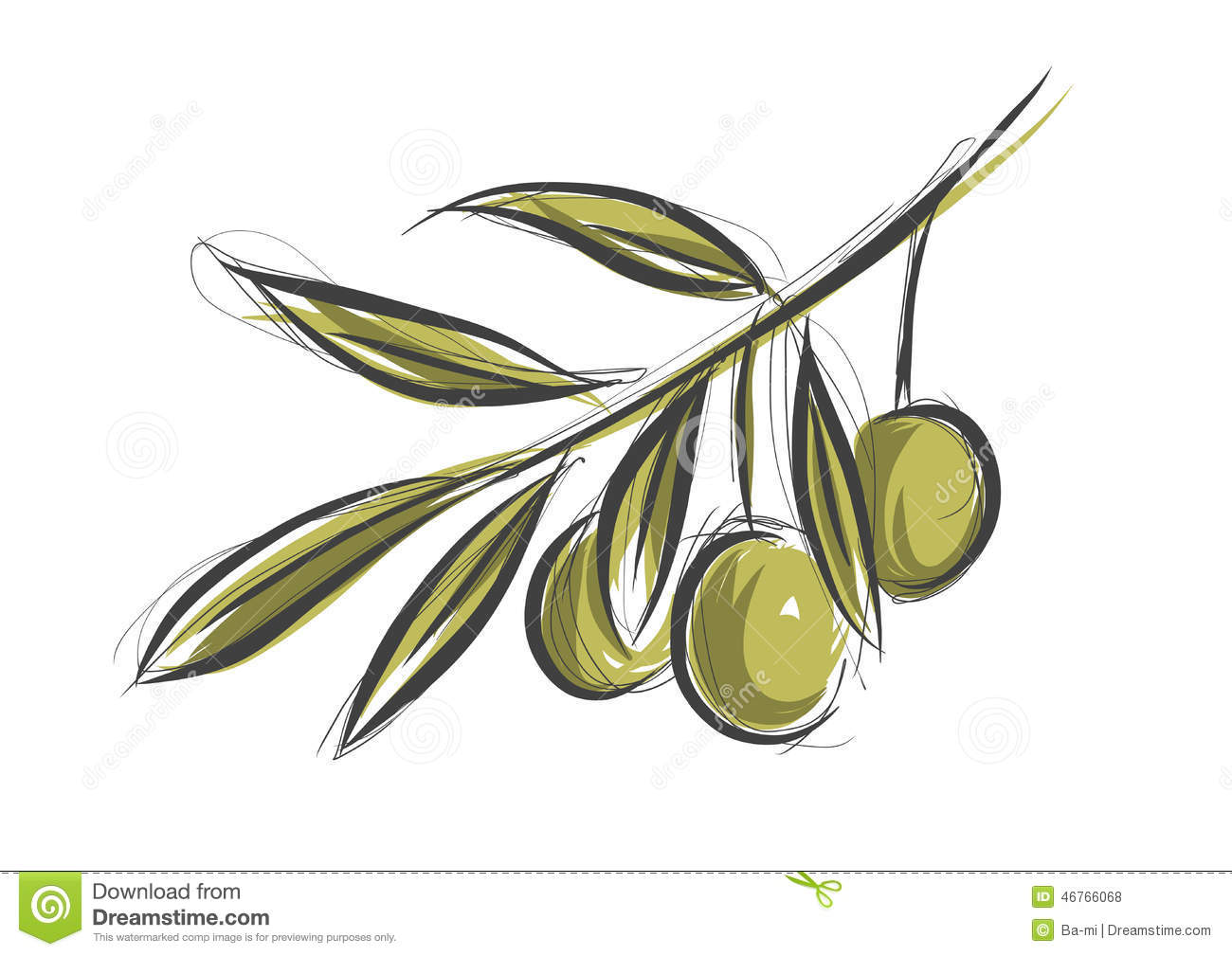 Olive Tree Branch Stock Vector Image Of Branche Vegetarian 46766068