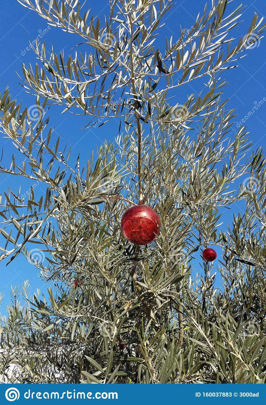 Olive Tree With Christmas Decorations Stock Image Image Of Globe Unusual 160037883