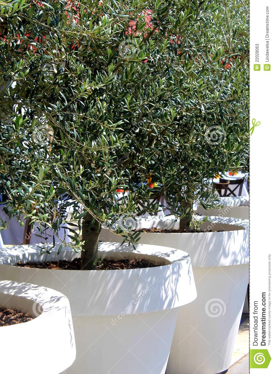 olive tree in flower pot stock photos image 22028063 flower garden clipart images flower garden clipart black and white