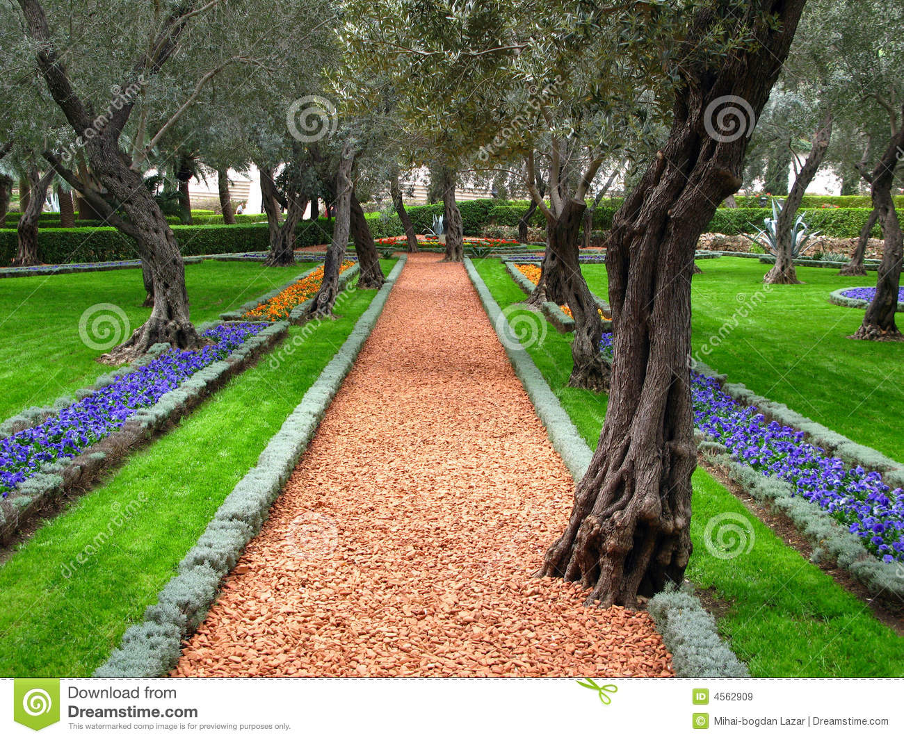 Olive Tree Garden, Bahai Temple, Haifa, Israel Royalty Free Stock ...