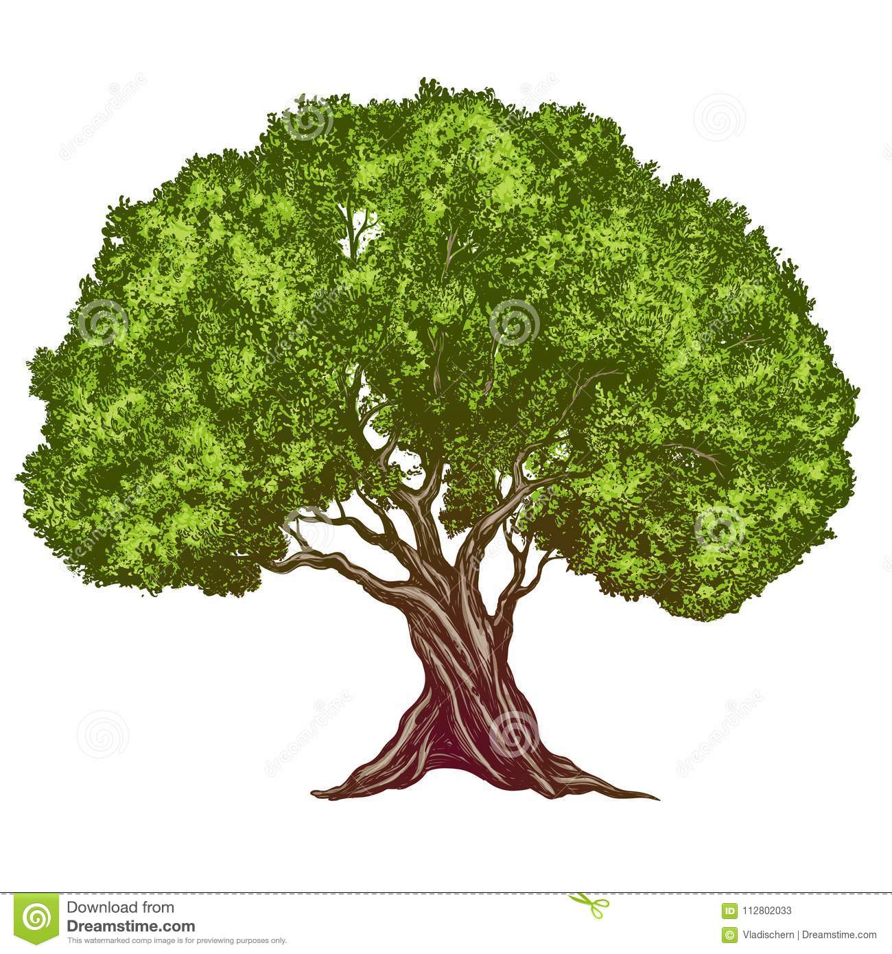 Free Images Realistic Tree Colored | colorimage.website