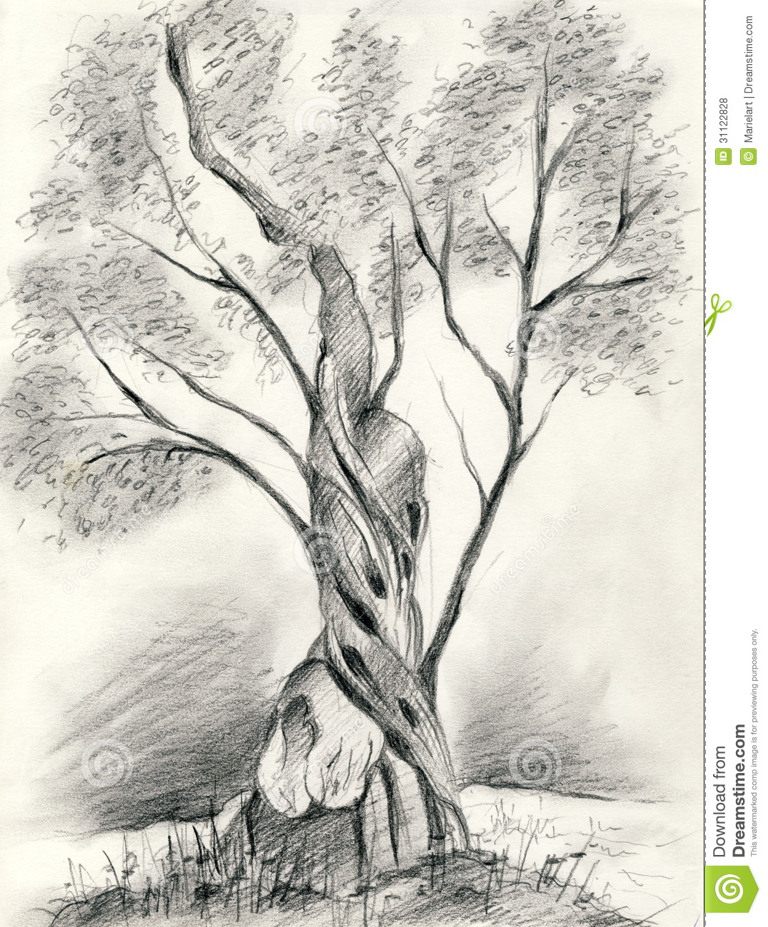A pencil drawing of a single olive tree