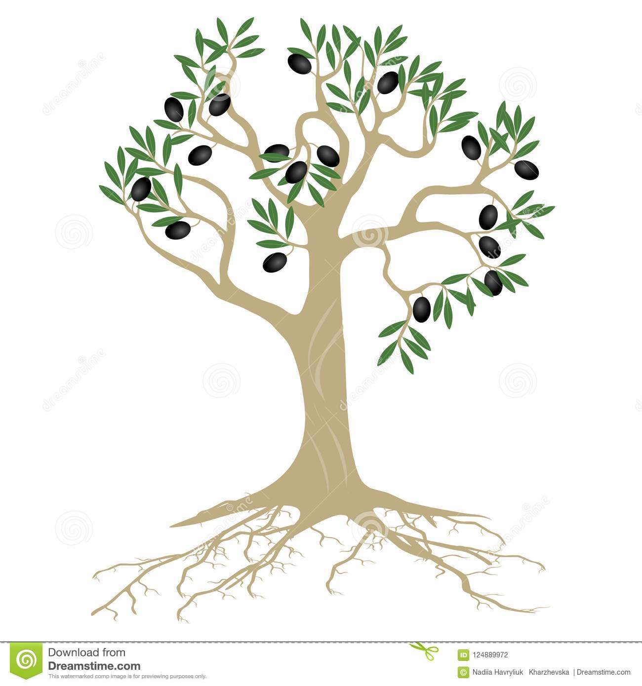 Olive Tree With Roots And Fruits On A White Background Stock Vector