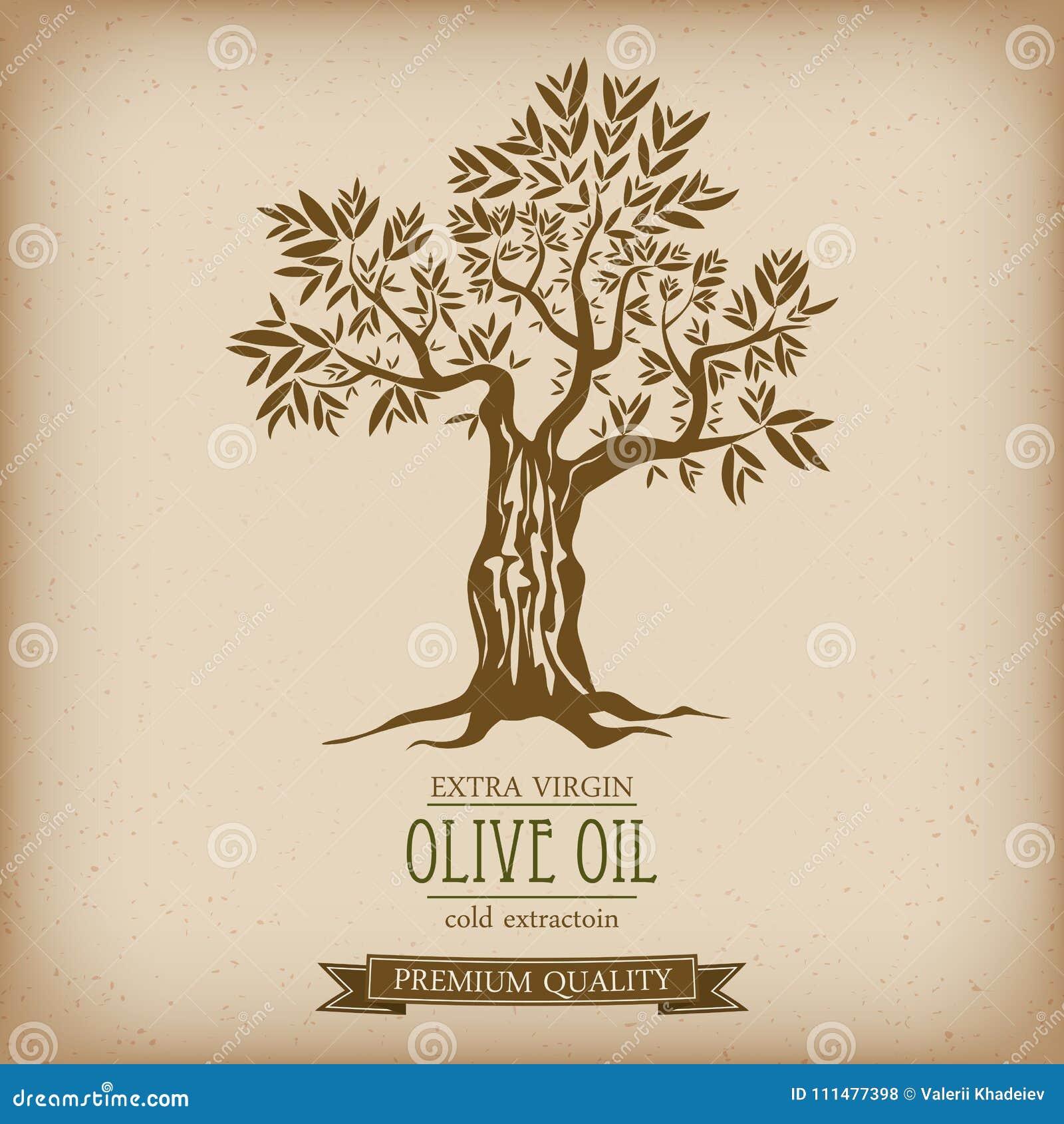 olive tree on vintage paper olive oil vector olive tree for