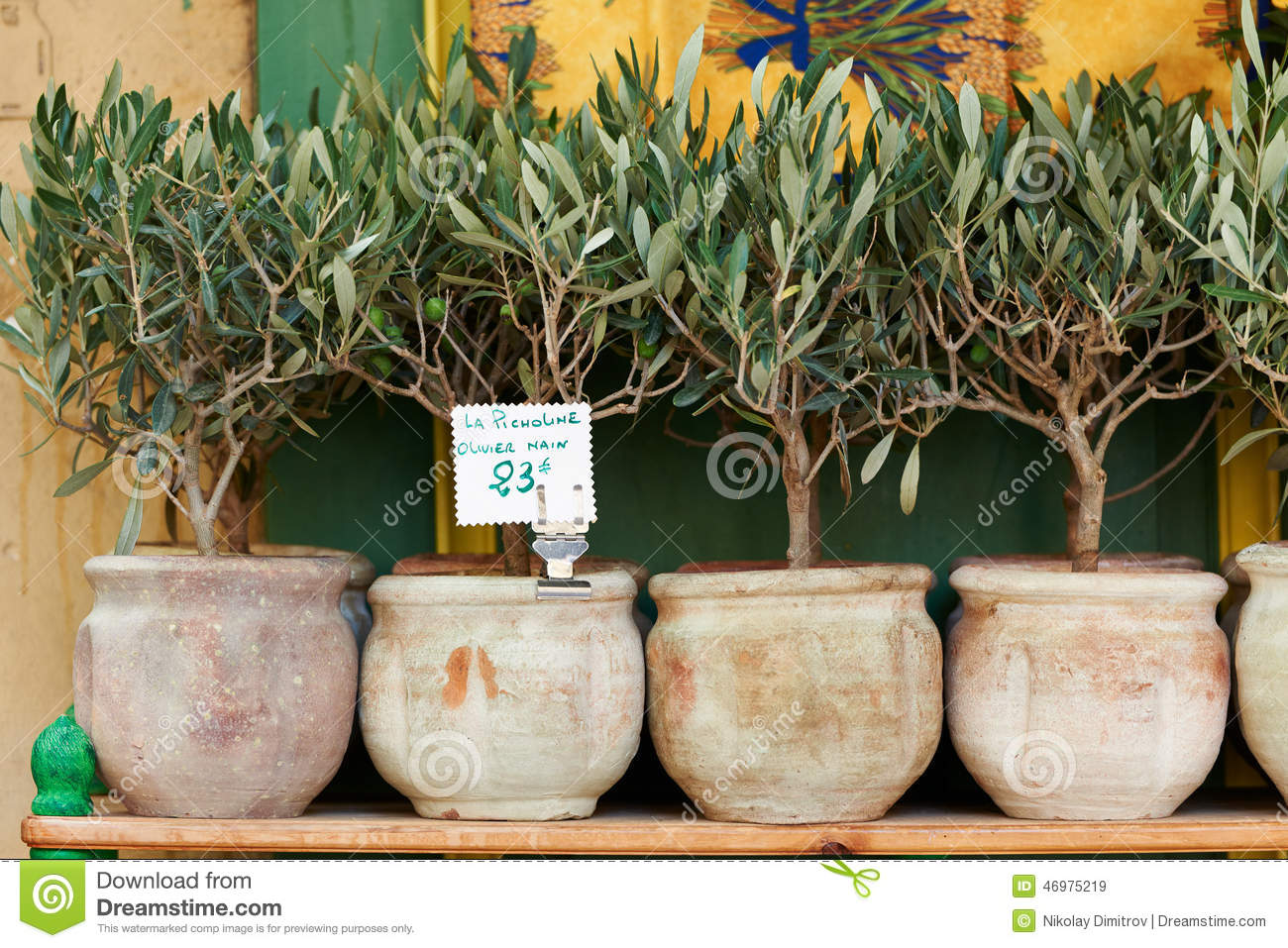 olive trees bonsai stock image image of bonsai france. Black Bedroom Furniture Sets. Home Design Ideas
