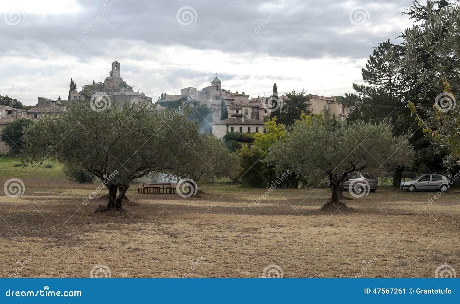 Olive Trees Stock Photo Image 47567261