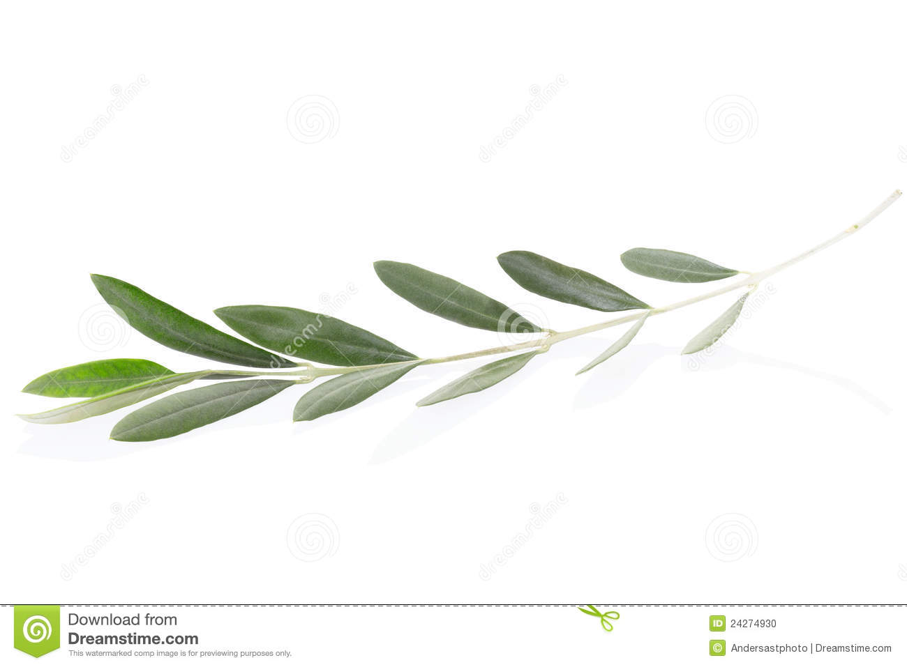 olive twig stock photo image 24274930 Olive Branch Silhouette Olive Branch Sketch