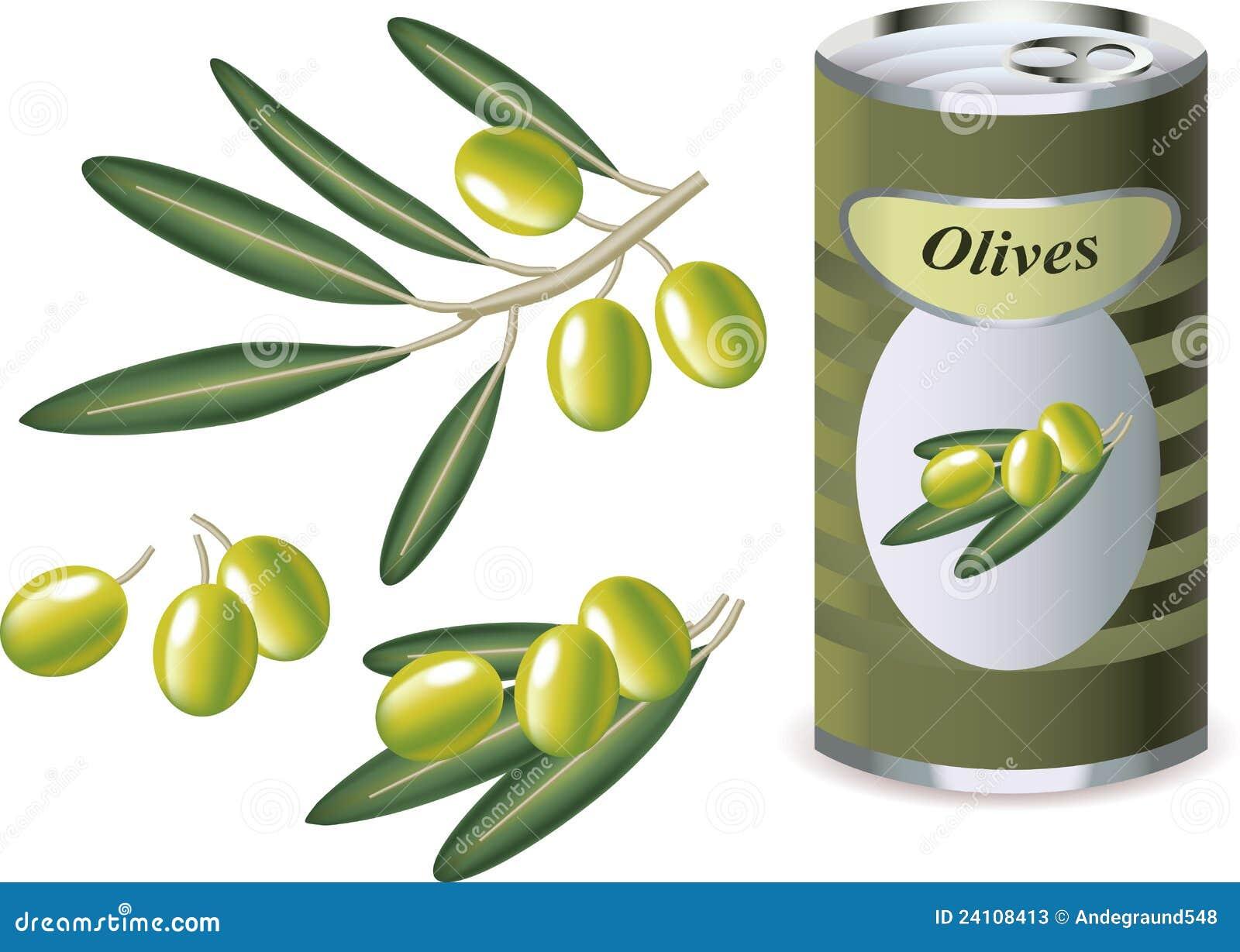 Olive verdi rami di ulivo e banca delle olive for Albero ulivo vettoriale