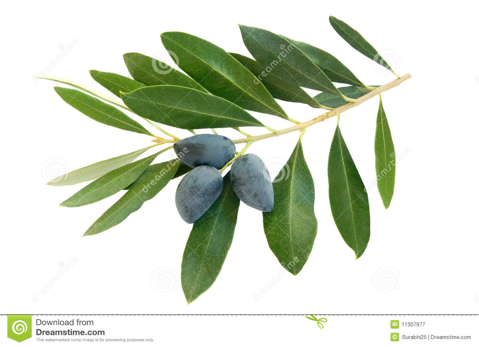 Oliven