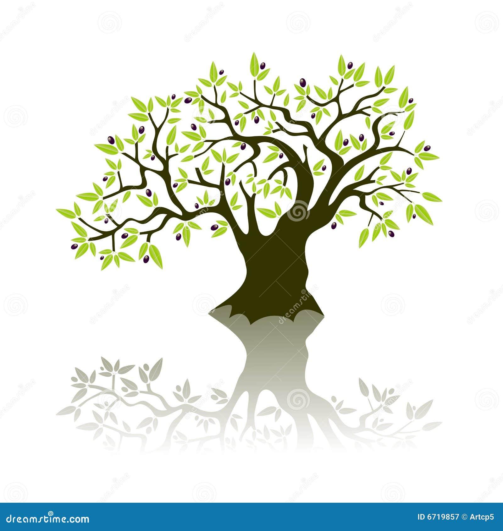 Olivenbaum vektor abbildung illustration von bestandteil for Albero ulivo vettoriale