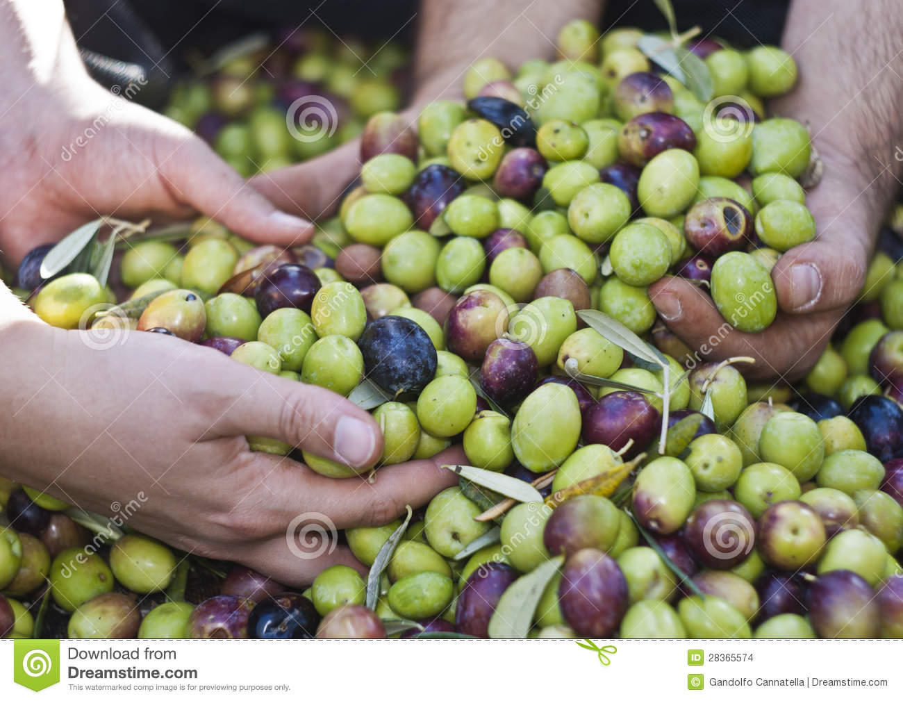 Olives in four hands