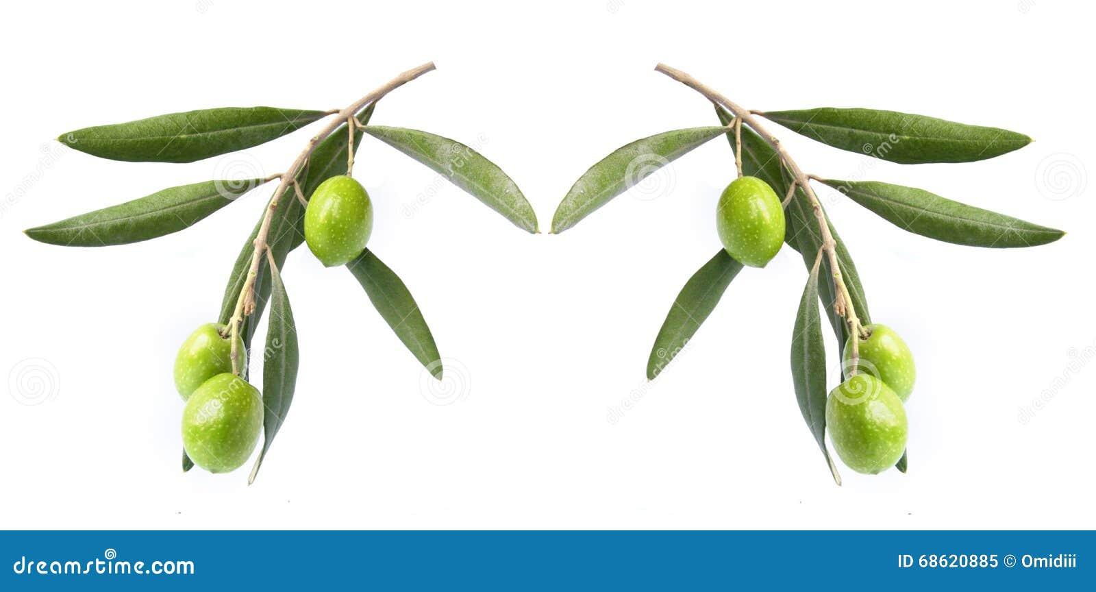 Olivgrön på filial