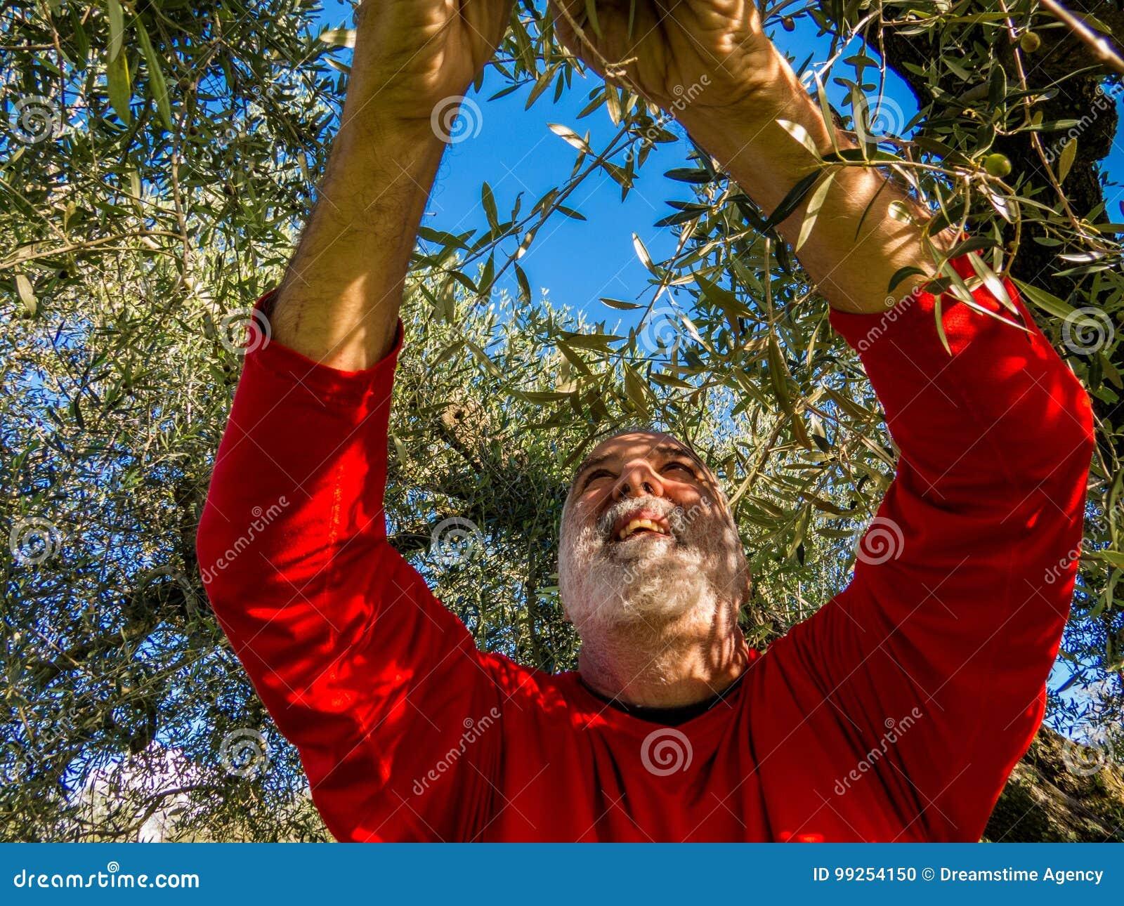 Olivgrüne Ernte