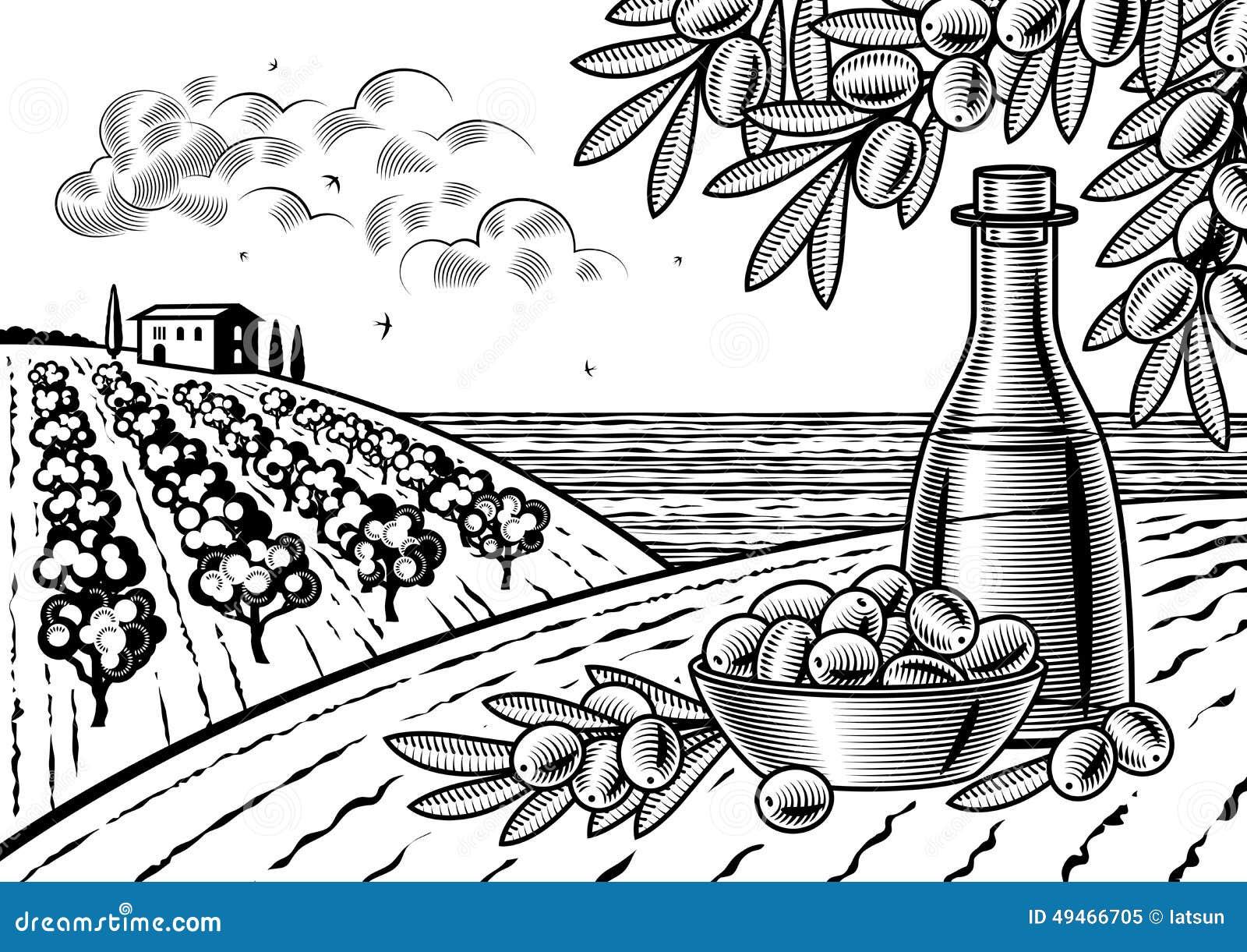 Oliwny żniwo krajobraz czarny i biały