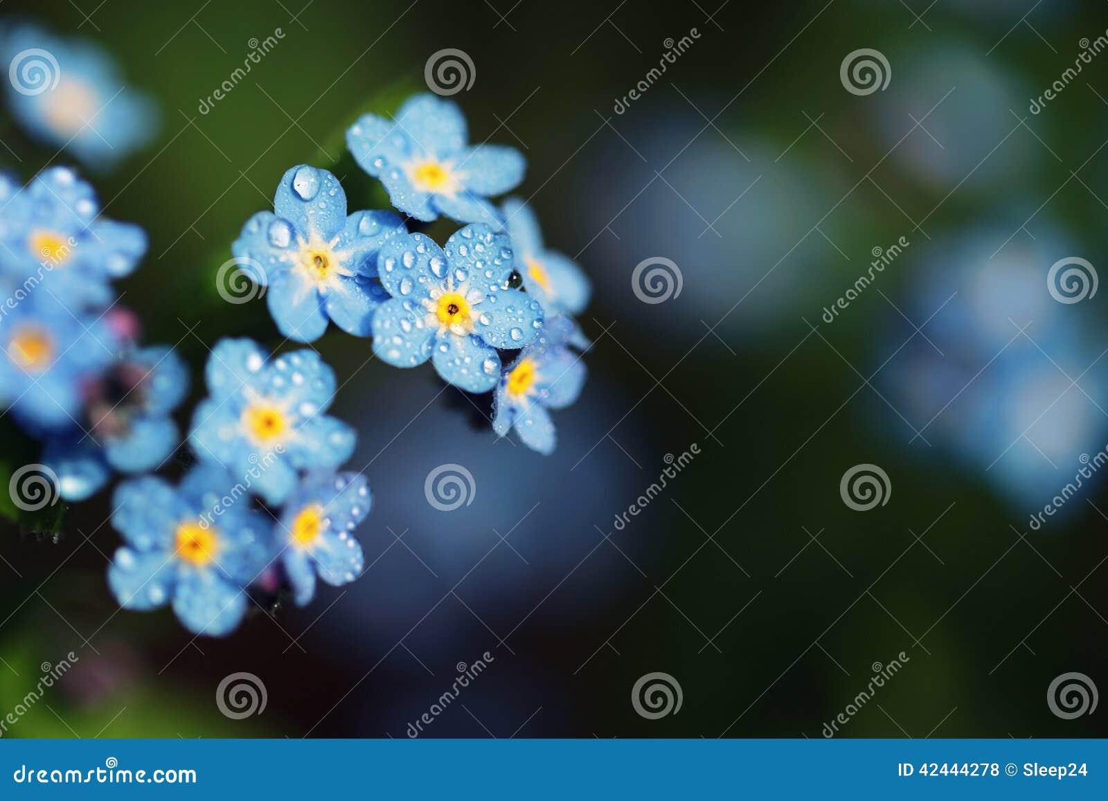 Olvídeme no las flores hechas con los filtros de color Sof