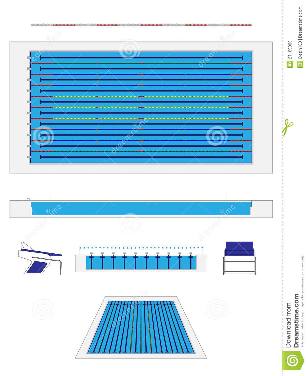 Olympic Size Swimming Pool Stock Vector Image Of Champion