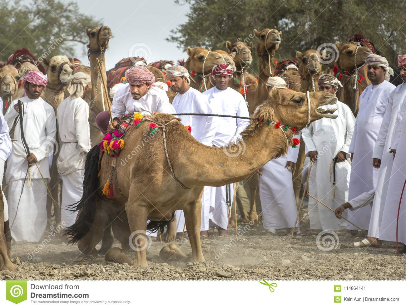 Omani men getting ready to race their camels on a dusty countrys