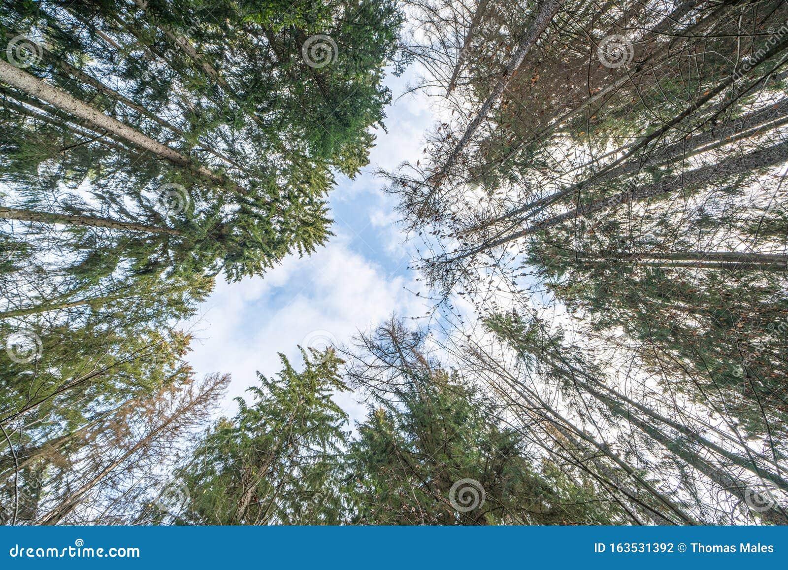 Omberg Ekopark And Nature Reserve Stock Photo Image Of Fresh Ostergotland 163531392