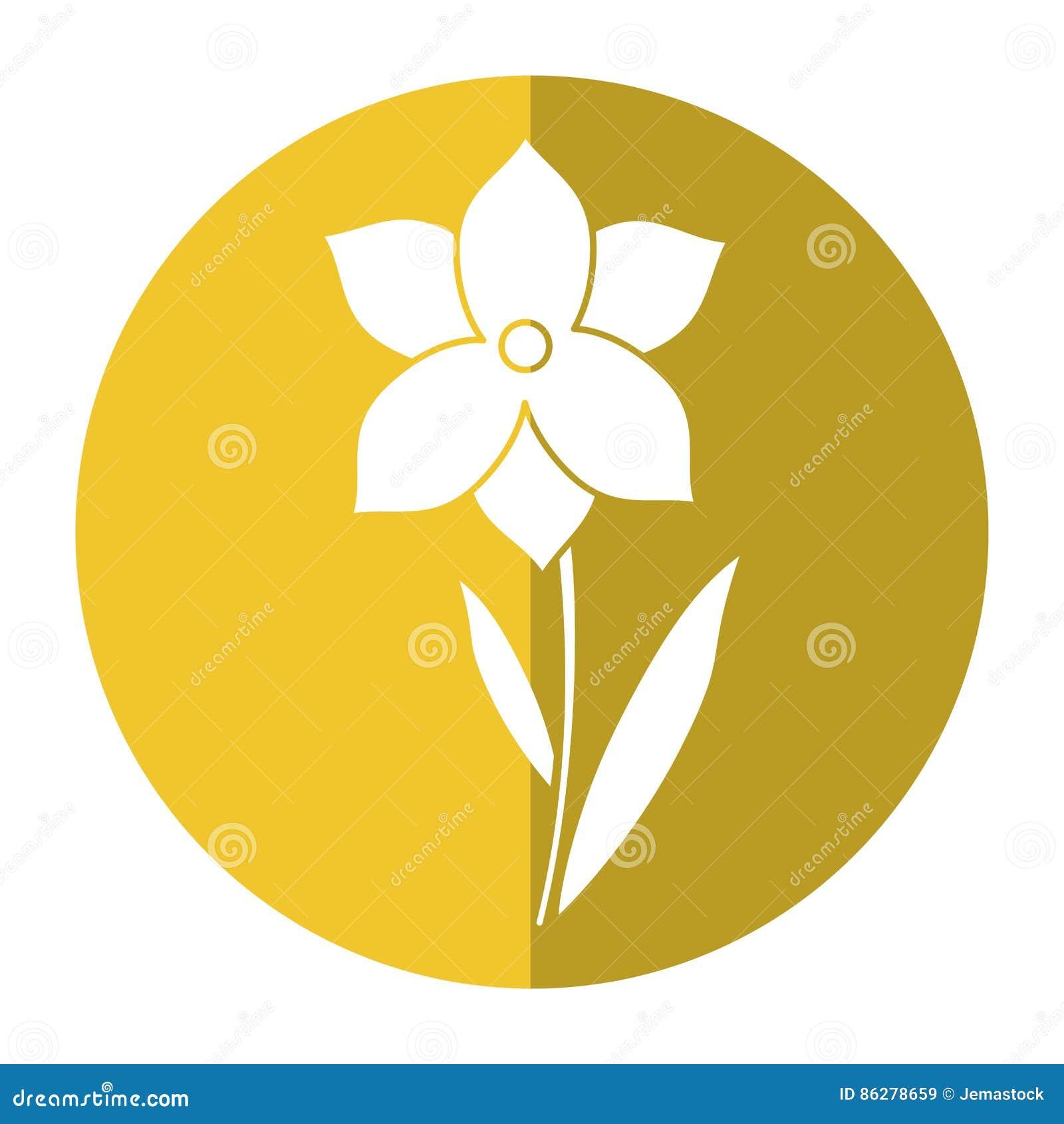 Ombra di stagione primaverile del fiore del narciso