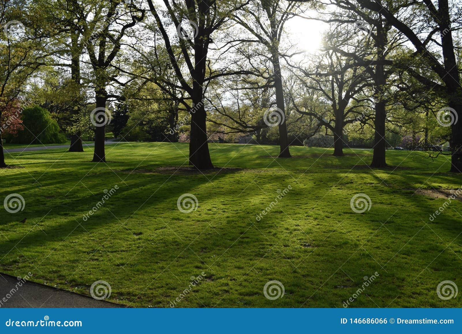 Ombre d arbre sur l herbe