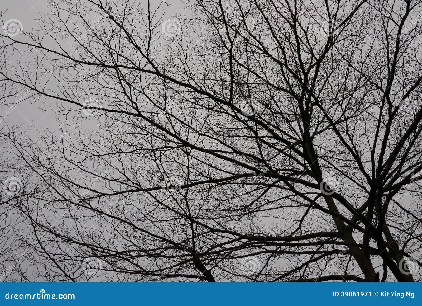 Ombre de dépression d arbre