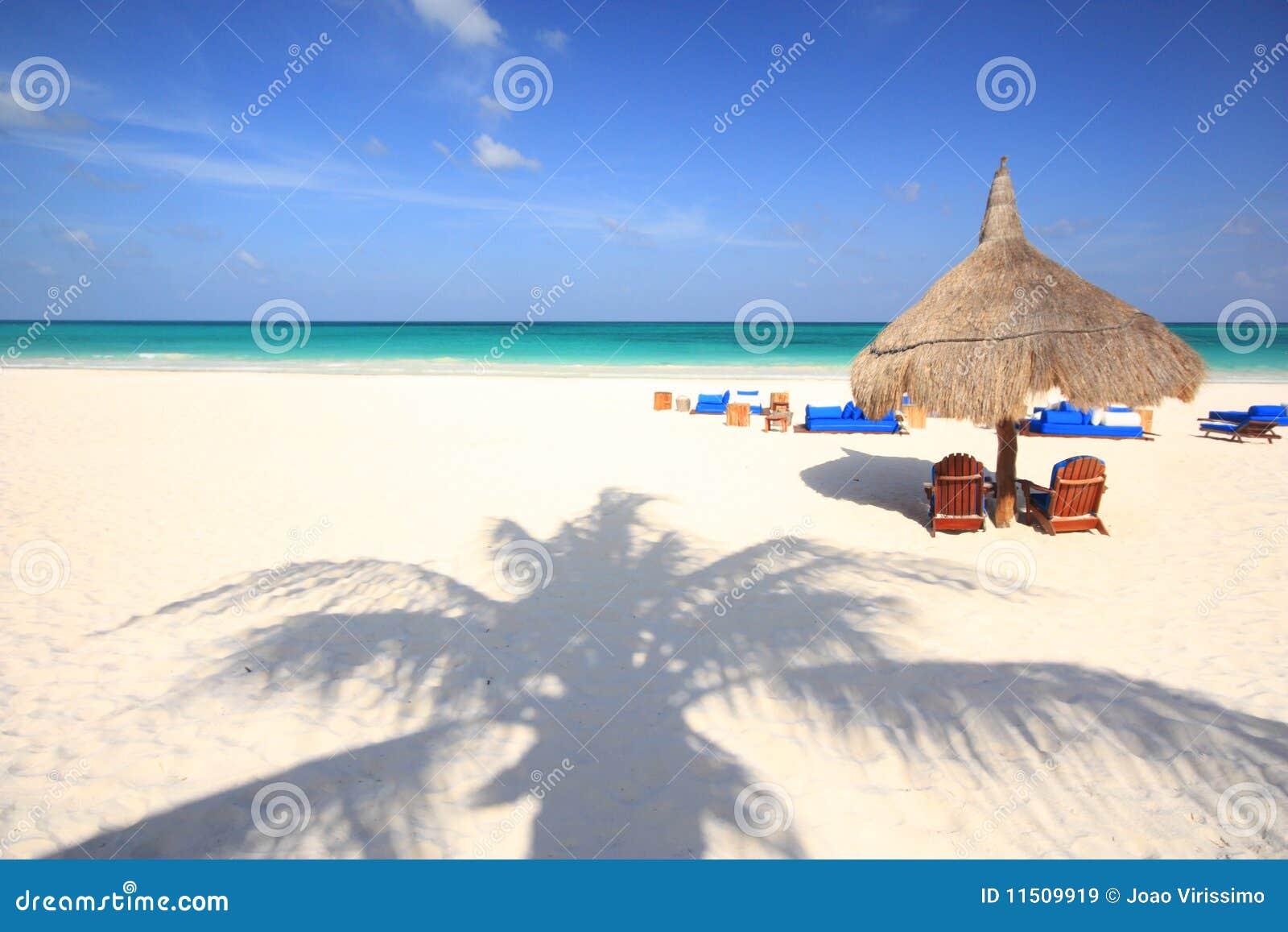 Ombre de palmier sur la plage
