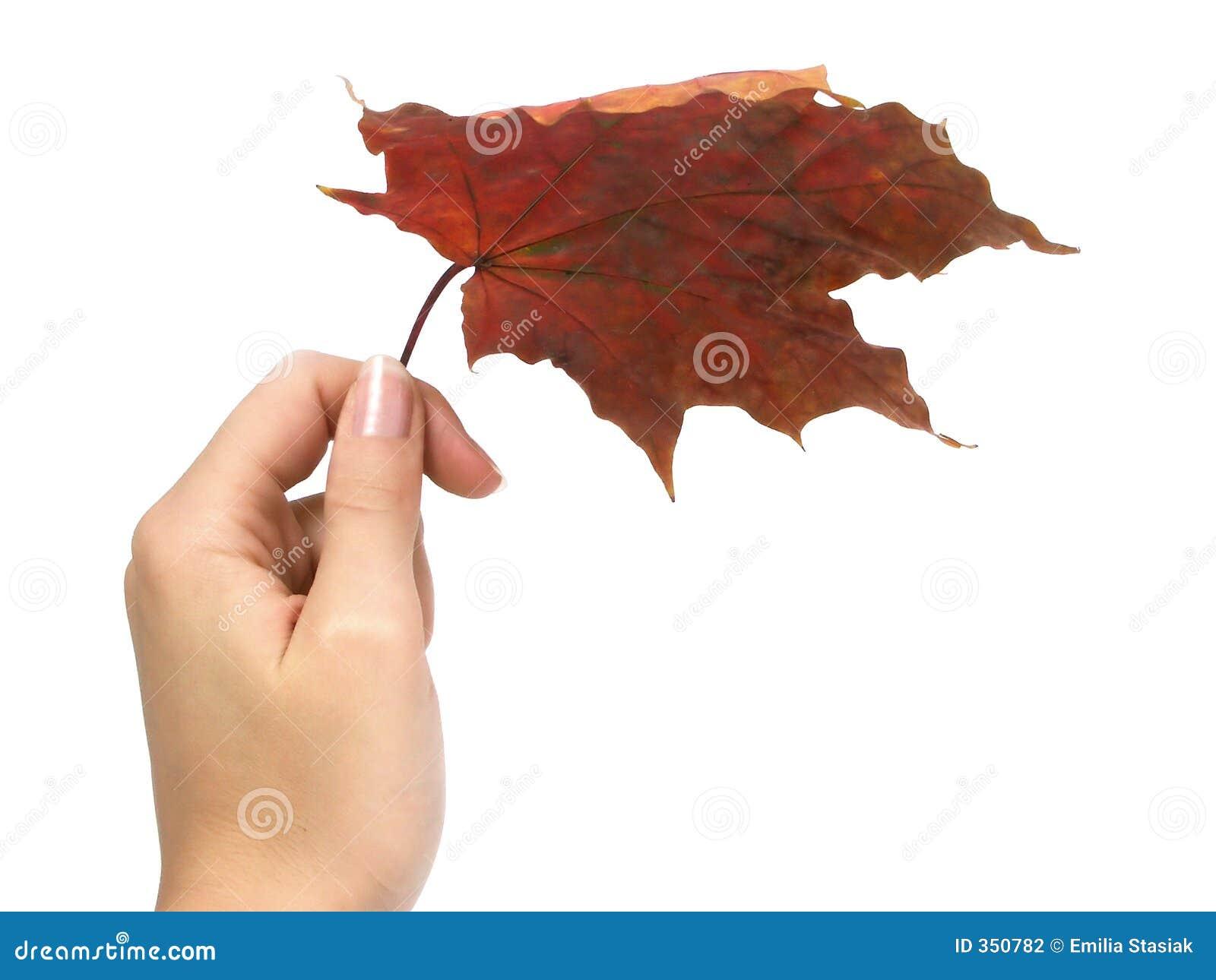 Ombrello di autunno