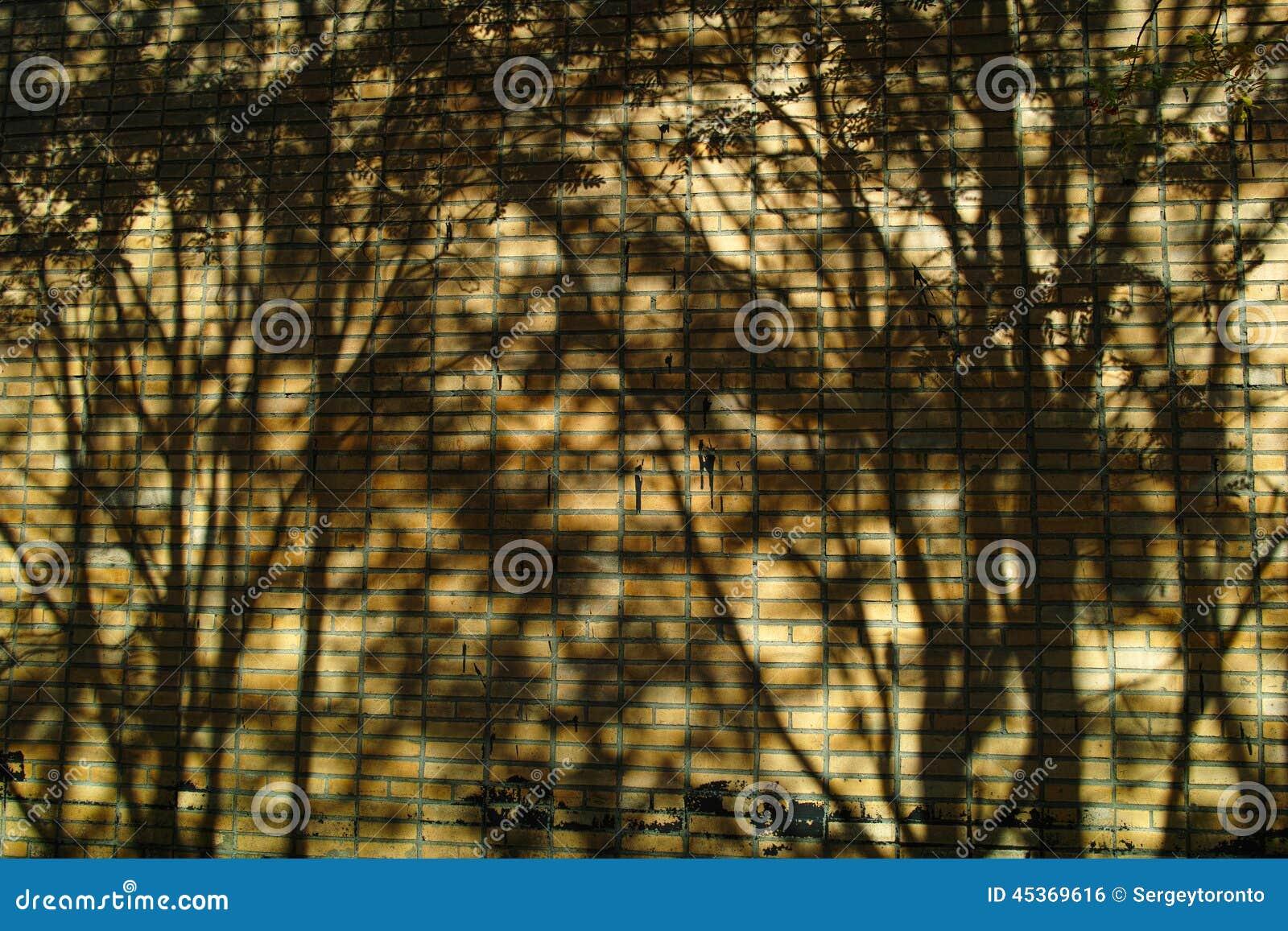 Ombres d arbre sur le mur