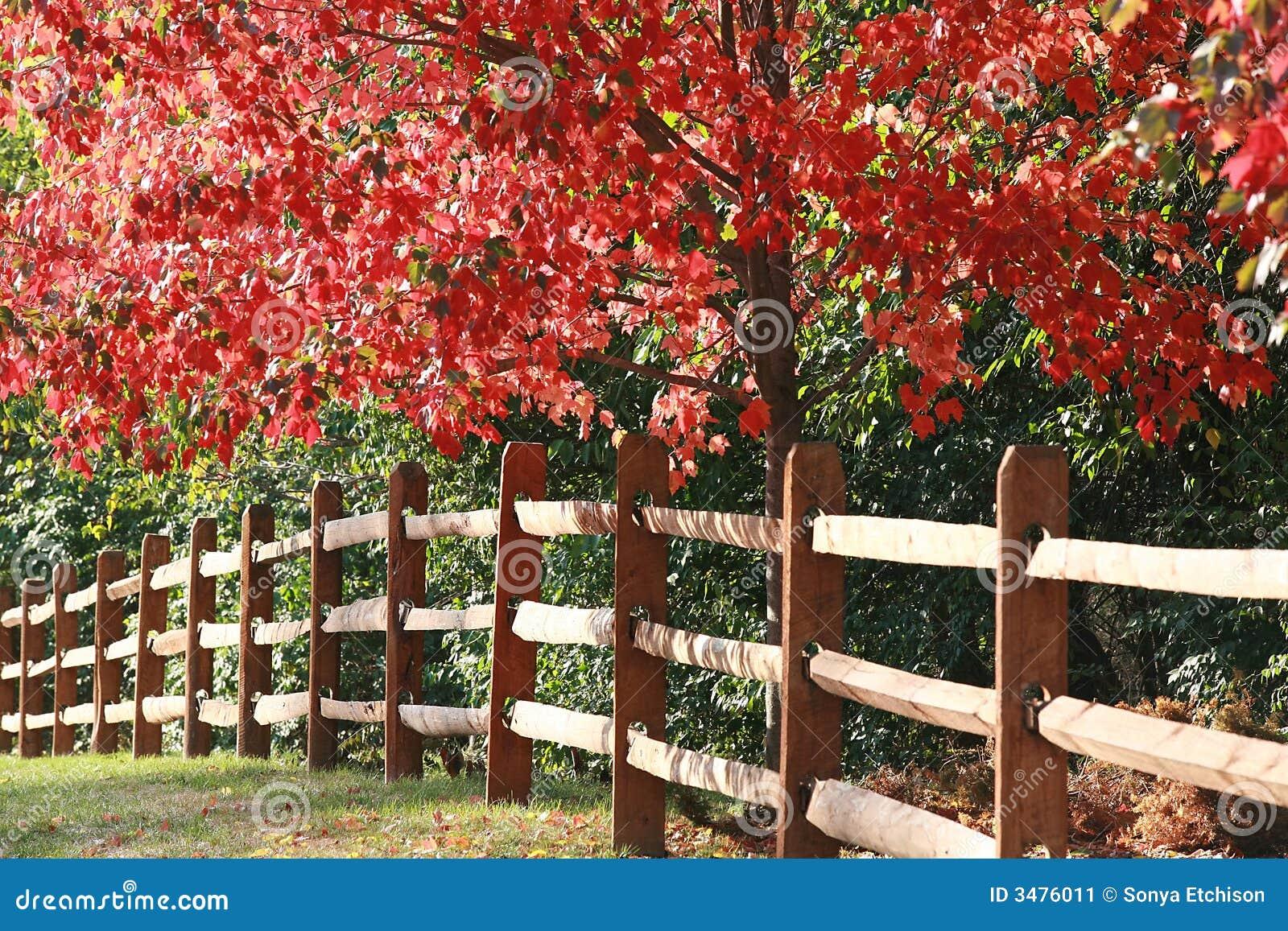 Omheining in de herfst