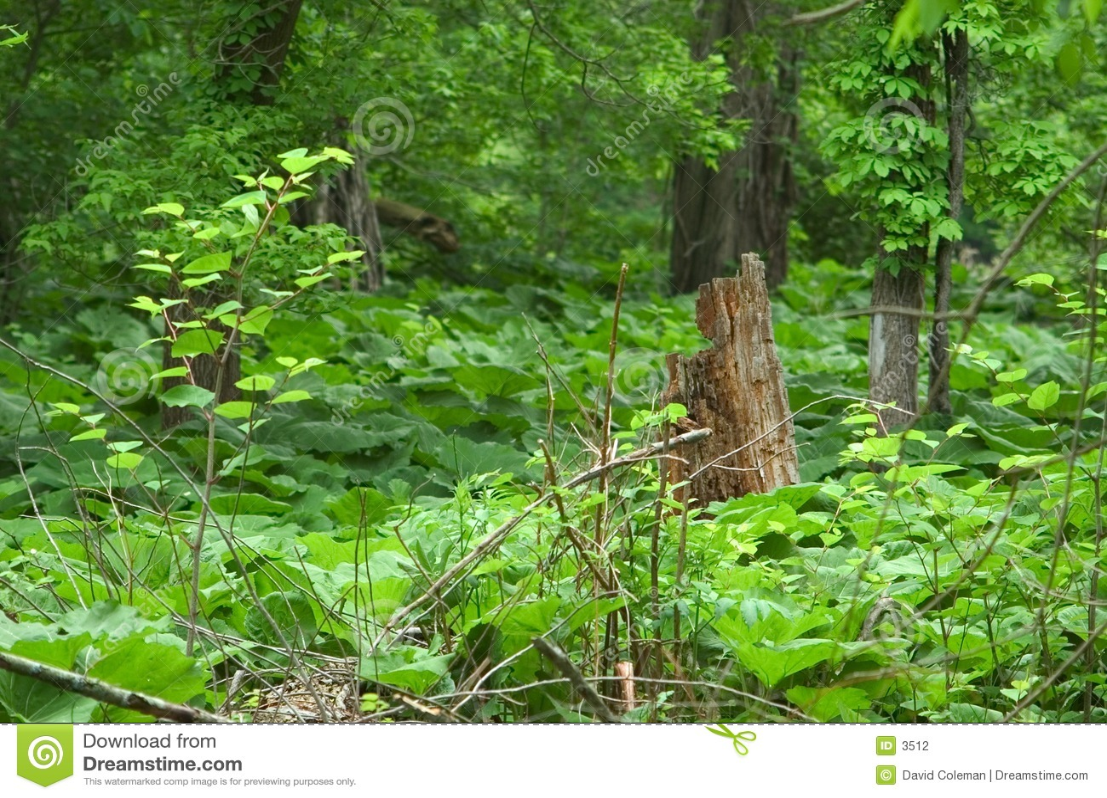 Omringde de stomp van de boom is vegetatie