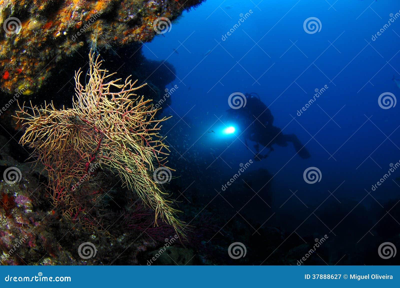 Omringende onderwater