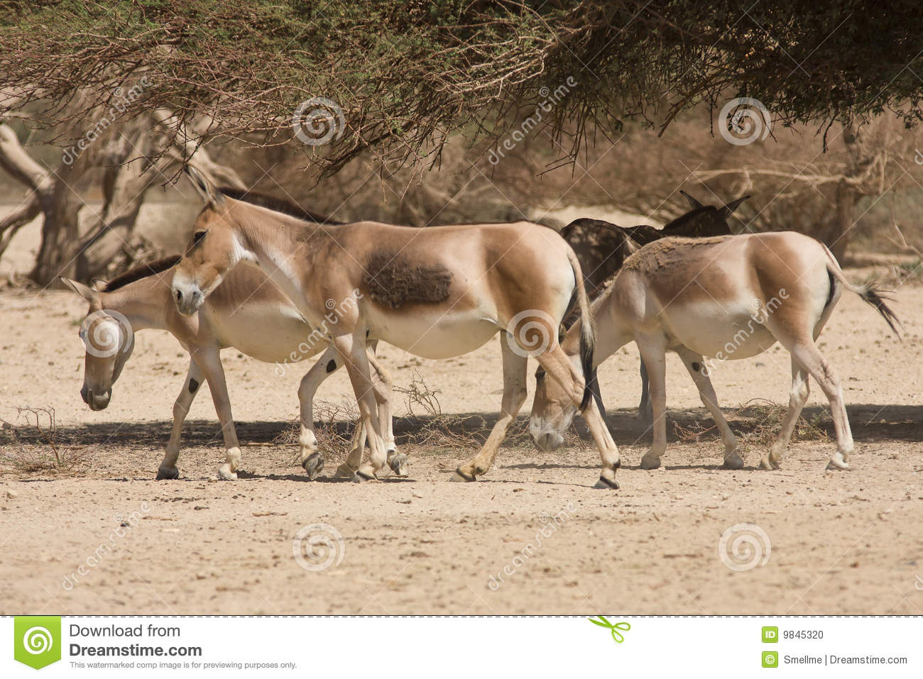 Onagers