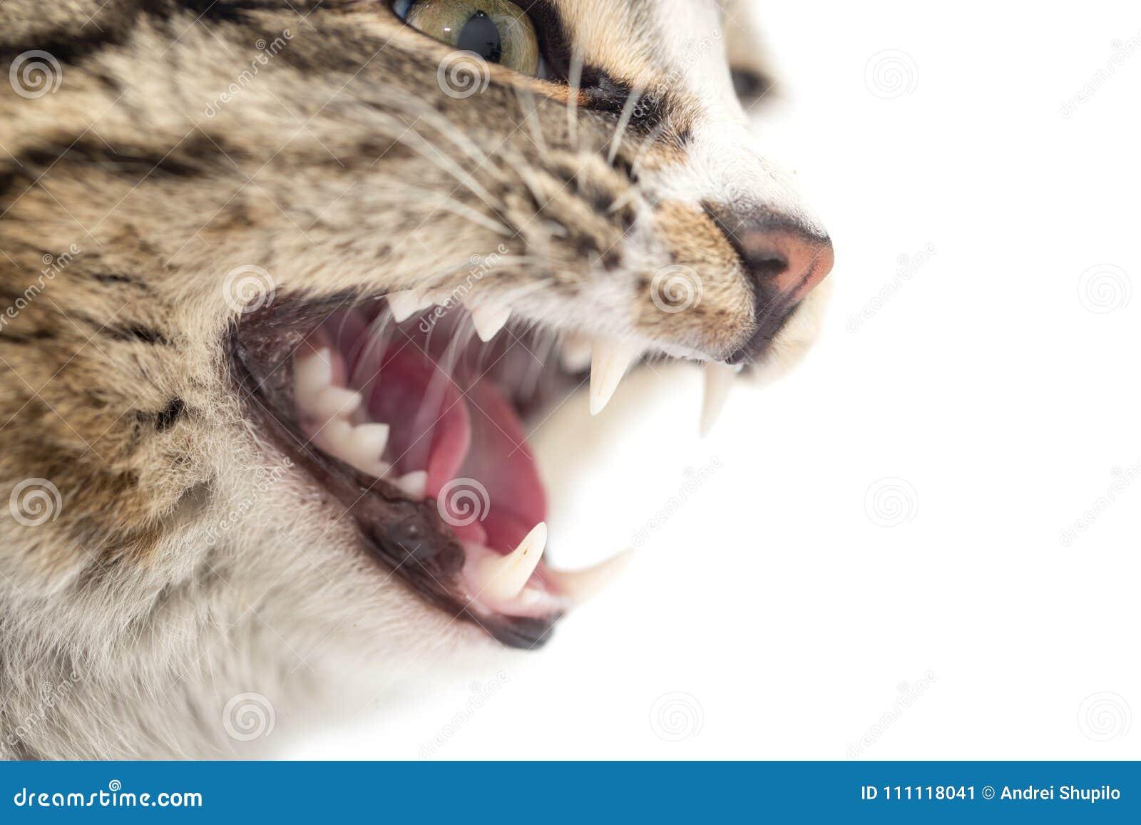 Onda katttänder på en vit bakgrund Makro
