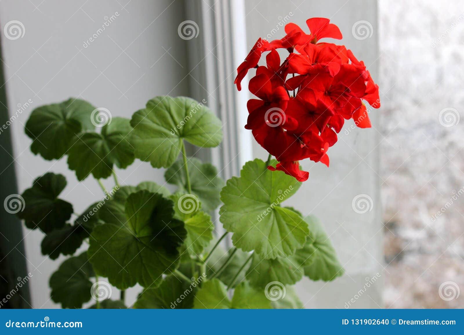 Onda muito bonita, brilhante da flor