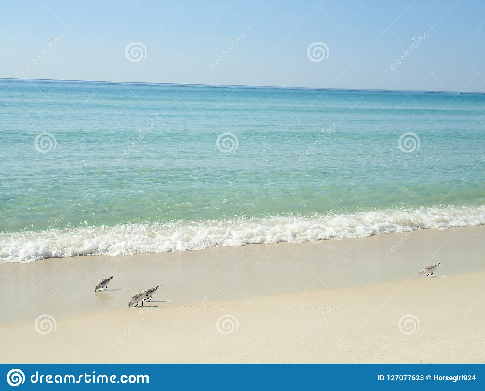 Onda verde de mar que se rompe en la playa de ciudad de Panamá con los pájaros