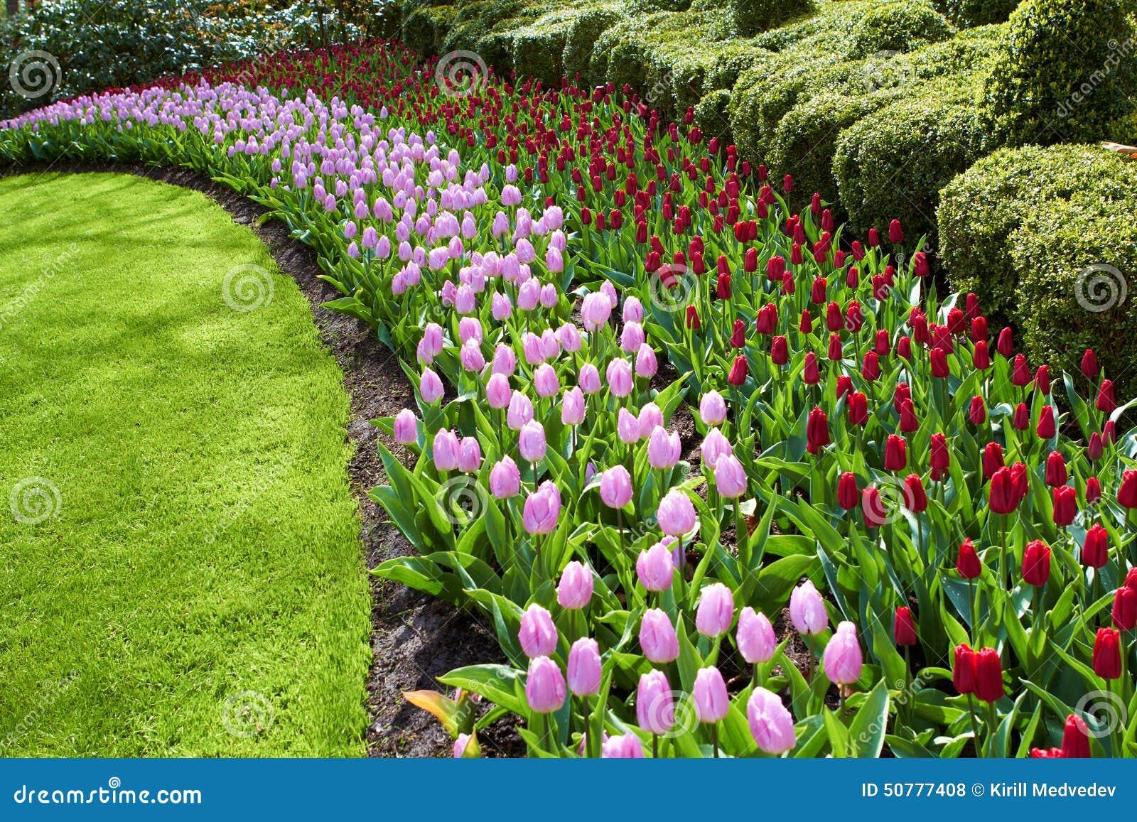 Ondas del parque natural de los jardines de keukenhof de tulipanes rojos y rosados foto de - Jardines de tulipanes en holanda ...