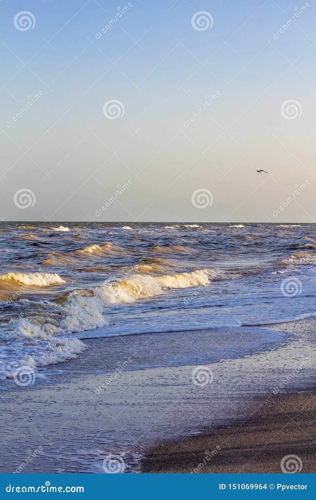 Ondas en el mar cerca de la orilla